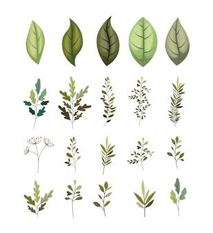 Rama con hojas iconos decorativos