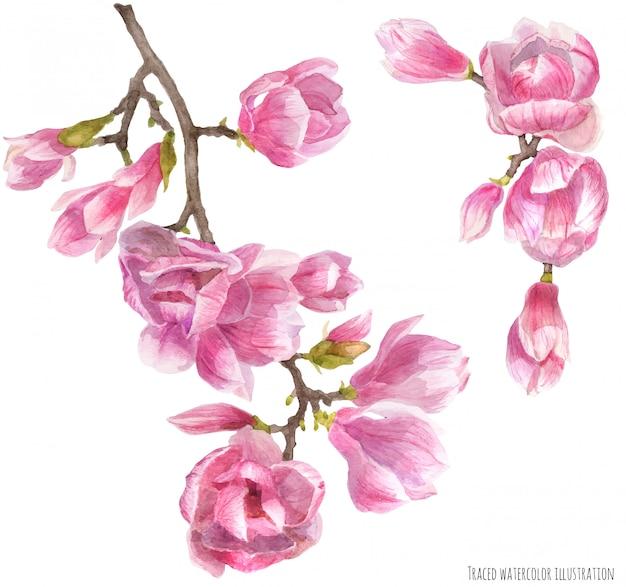 Rama de magnolia floreciente