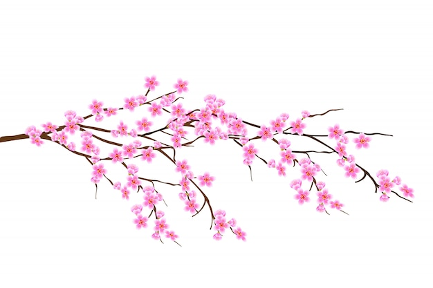 Rama de primavera horizontal de flores de cerezo