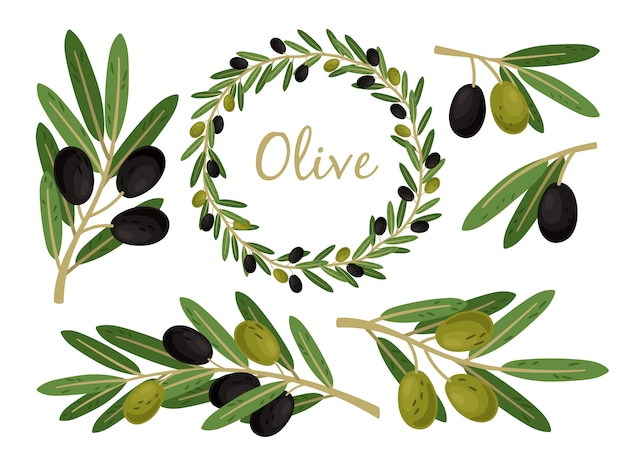 Ramas de aceitunas y corona de olivo. conjunto de rama y corona de aceitunas griegas, ramas y hojas de árbol de alimentos de aceite de verano de vector