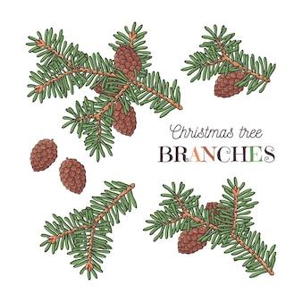 Ramas de los árboles de navidad
