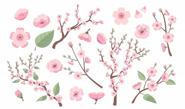 Ramas florecientes de sakura
