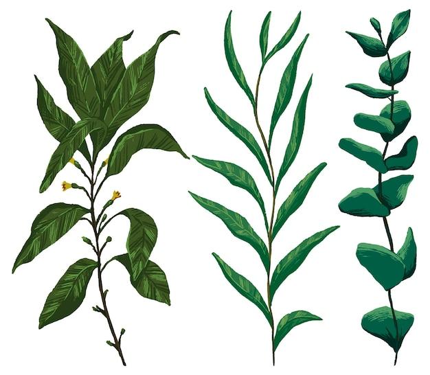 Ramas con hojas conjunto de ilustraciones vectoriales dibujadas a mano. colección de bocetos botánicos realistas. dibujo vintage coloreado aislado en blanco. elemento suave para diseño, impresión, decoración.