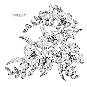 Ramo de flores freesia dibujo ilustración
