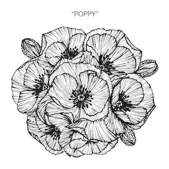 Ramo de poppy flower drawing illustration.