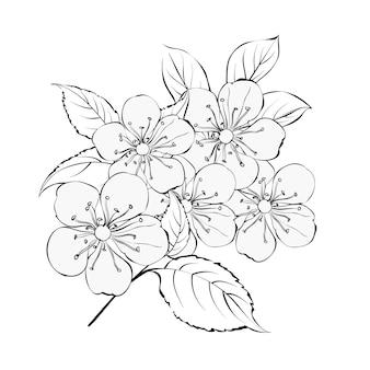 El ramo primaveral de flores de sakura.