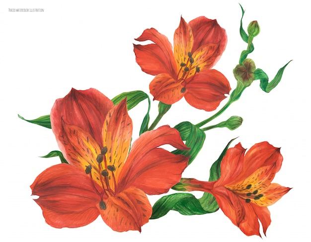 Ramo de ramillete con flores rojas de alstroemeria