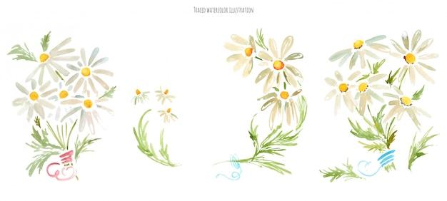 Ramos de flores de margarita