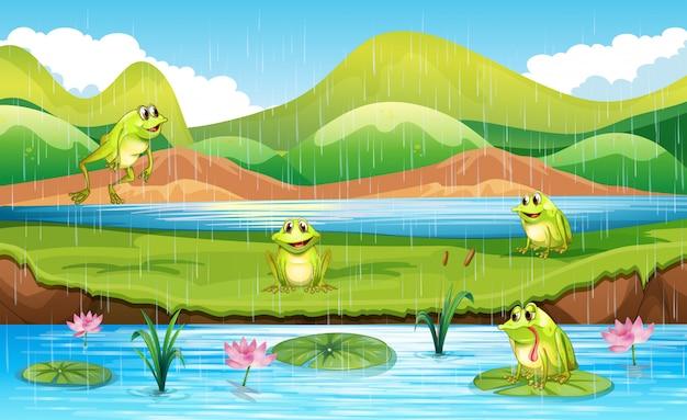 Ranas con escena de estanque.