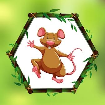 Rata brown en el marco de bambú