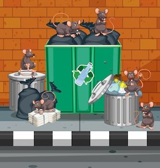 Ratas sucias por todos los botes de basura