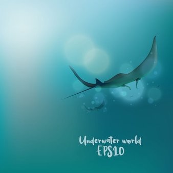 Las rayas bajo el agua.