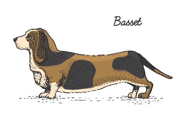 Raza de perro grabado, dibujado a mano ilustración en estilo scratchboard grabado en madera, especies vintage.