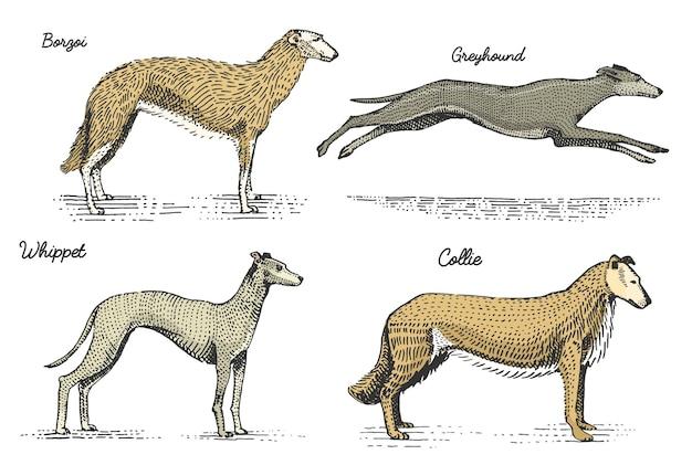 Razas de perros grabadas, ilustración dibujada a mano en estilo scratchboard grabado en madera