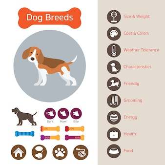 Razas de perros, infografía, icono, símbolo, elemento