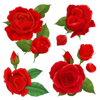 Realista conjunto de iconos de flor rosa