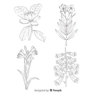 Realista dibujado con colección de flores de botánica