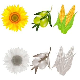 Realista de girasol, maíz y aceitunas.