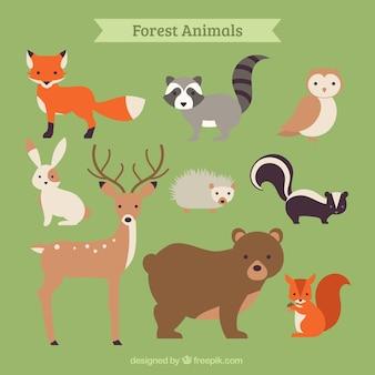 Recogida de animales de bosque dibujado a mano