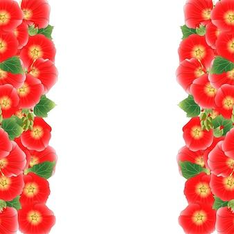 Red alcea rosea border