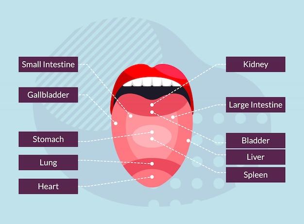 Relación de las partes de la lengua con los órganos del cuerpo humano - ilustración infográfica