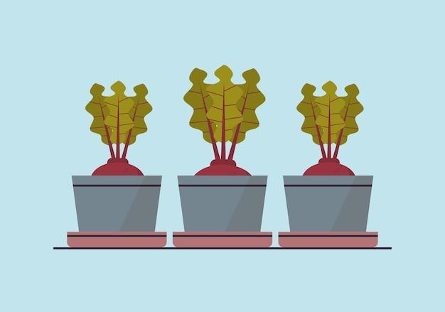 Remolacha en macetas o plantas de rábano en macetas plantación de invernadero botánico jardín gegetable concepto horizontal ilustración vectorial