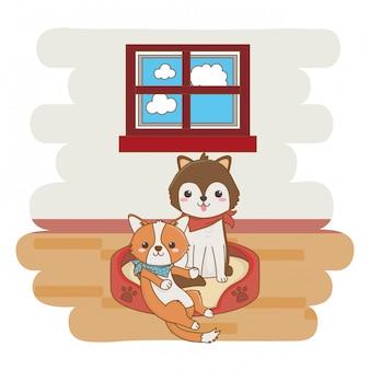Remolque perro posando en la cama en la sala de estar