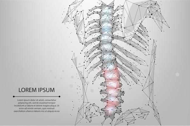 Resumen línea de malla y punto fisioterapia columna vertebral humana. render poligonal hernia de espalda femenina