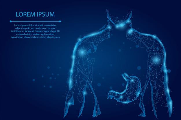 Resumen puré línea y punto hombre silueta estómago sano puntos conectados low polyframe