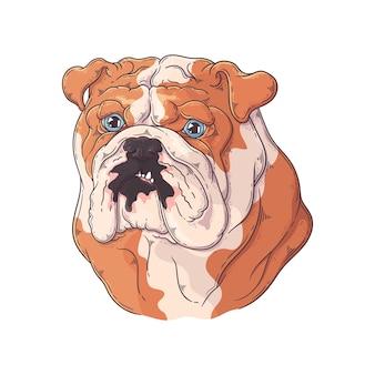 Retrato de bulldog dibujado a mano