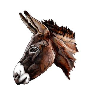 Retrato de cabeza de burro acuarela en blanco