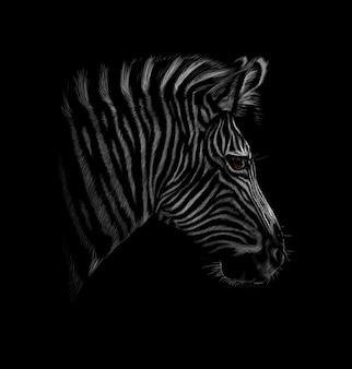 Retrato de una cabeza de cebra sobre un fondo negro. ilustración vectorial