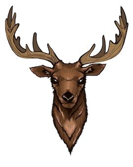 Retrato de cabeza de ciervo salvaje