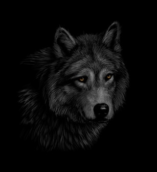 Retrato de una cabeza de lobo sobre un fondo negro. ilustración vectorial
