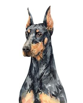 Retrato de doberman pinscher. acuarela de perro cabeza. pintura doberman.