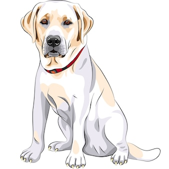 Retrato de un primer plano de grave raza de perro amarillo labrador retriever se sienta
