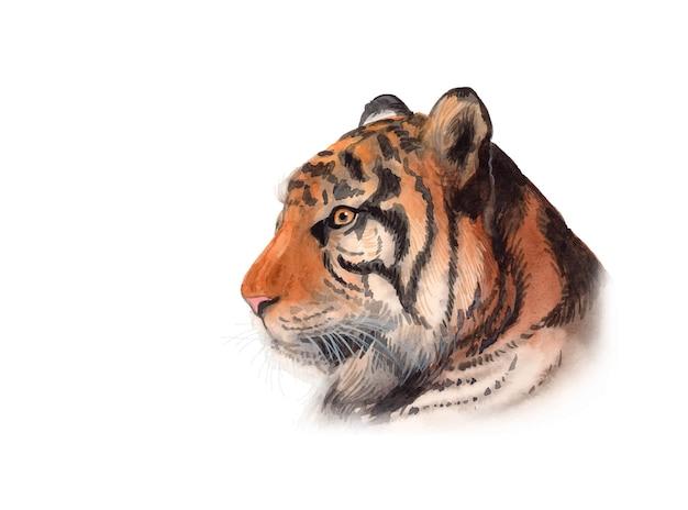 Retrato de tigre pintado a mano en acuarela