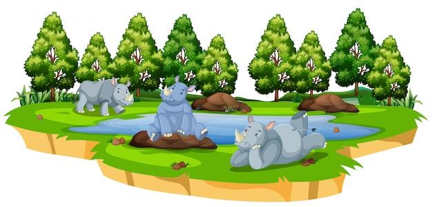 Rinoceronte salvaje en la naturaleza