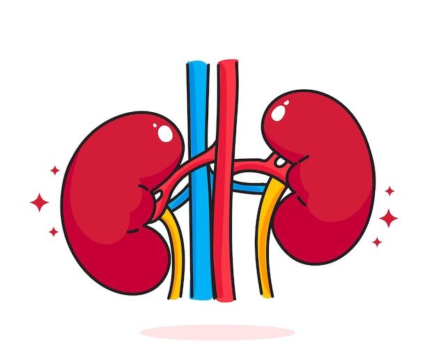 Riñón anatomía humana biología órgano sistema corporal cuidado de la salud y médico dibujado a mano ilustración de arte de dibujos animados
