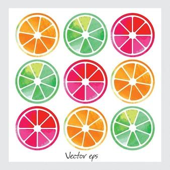 Rodaja de frutas de acuarela