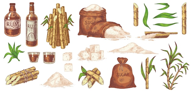 Ron y caña de azúcar dibujados a mano
