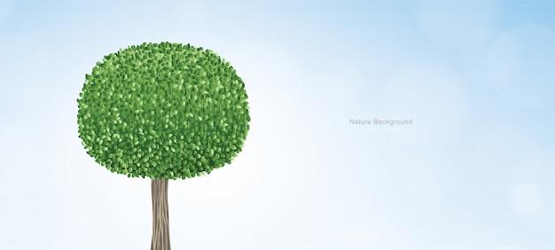 Ronda abstracta del árbol verde con el cielo azul.