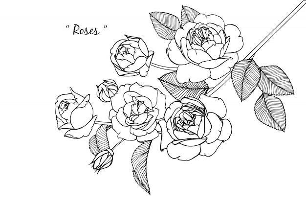 Rosa hoja y dibujos de flores. vintage dibujado a mano ilustraciones botánicas. vector.