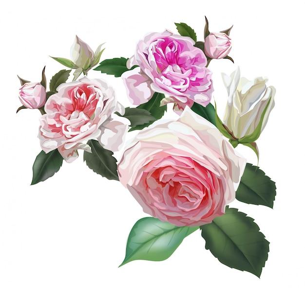 Rosas inglesas flor rosa, hermosas flores naturales.