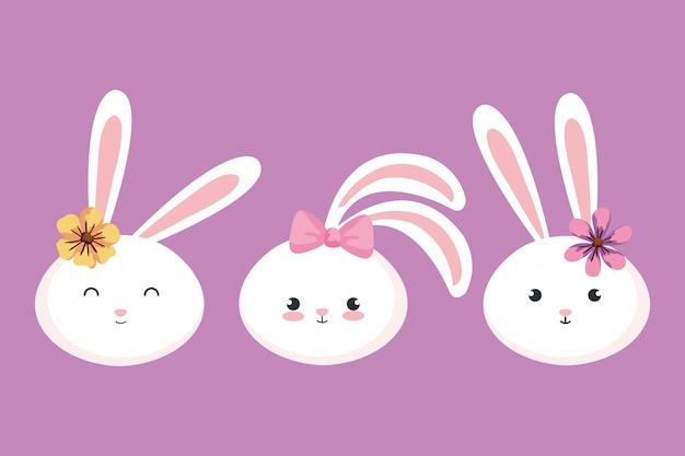 Rostros de lindos conejos animales