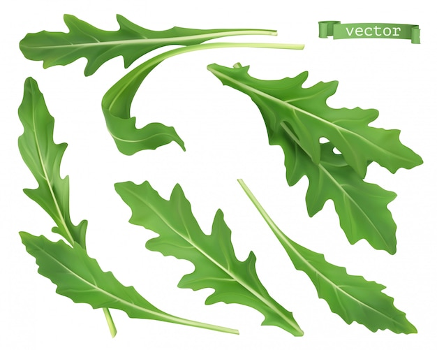 Rúcula, ensalada de rúcula de jardín vegetal. ilustración de comida realista 3d.