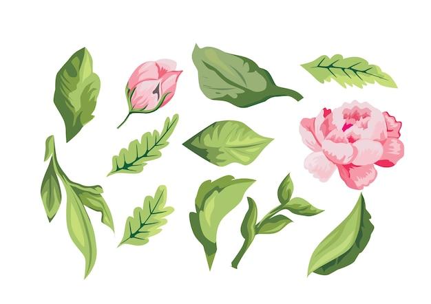 Ruptura de la colección de rosas