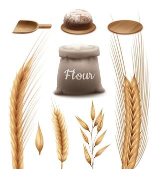 Saco de harina con pala de madera y bandeja con pan fresco y trigo, cebada, avena y centeno aislado sobre fondo blanco.