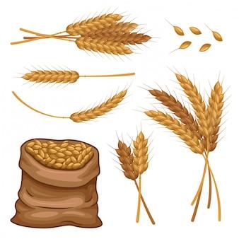 Saco de trigo espigas y granos vector conjunto