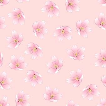 Sakura cherry blossom en fondo rosa